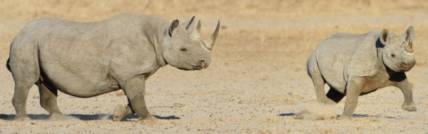 About Us Rhinos