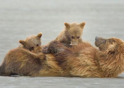 Alaska-20-July-3-Aug01352_2014_