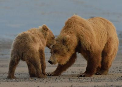Alaska-20-July-3-Aug02117_2014_