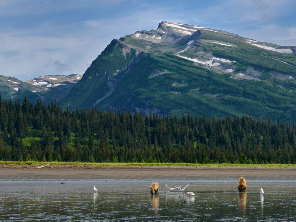 Alaska-20-July-3-Aug02584_2014_