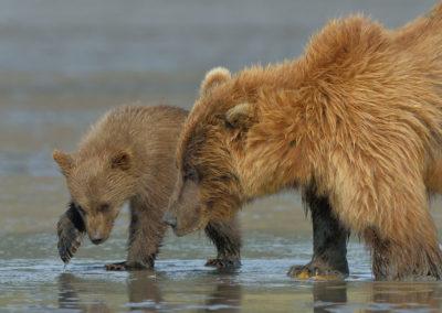 Alaska-20-July-3-Aug02770_2014_