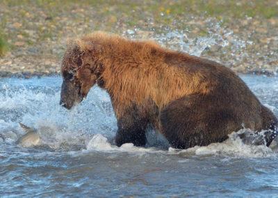 Alaska-20-July-3-Aug04294_2014_