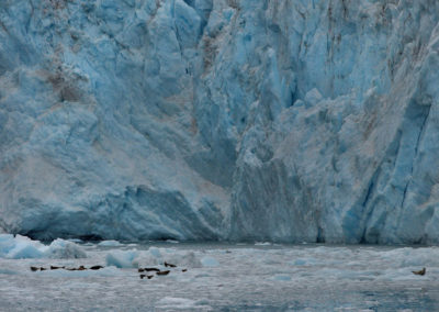 Alaska-31-July--8-Aug_00281D