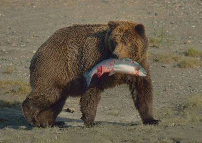 Alaska--Sept-1209288