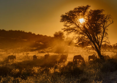Kgalagadi-20--28th-July-2016_02272-Edit
