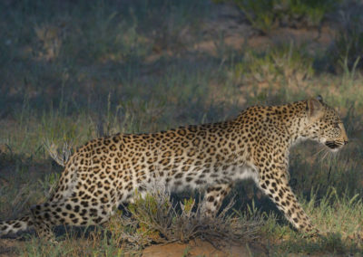 Kgalagadi-24th-Apr-1st-May-2017_01359