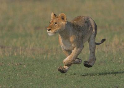 Masai-Mara-1st-27th-Sept-2017_03156D