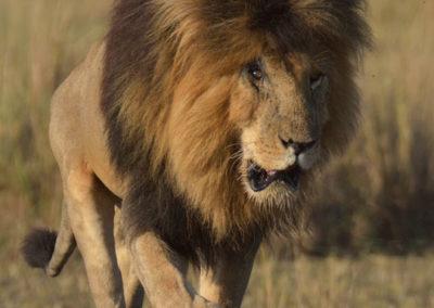 Masai-Mara-1st-27th-Sept-2017_04352D-(3)