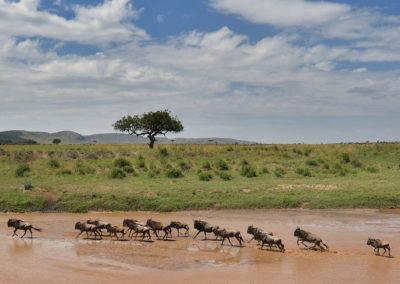 Masai-Mara-1st-27th-Sept-2017_06913D