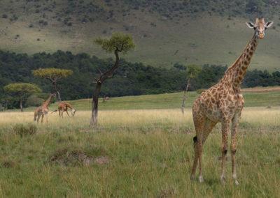 Masai-Mara-1st-27th-Sept-2017_07180D-(2)