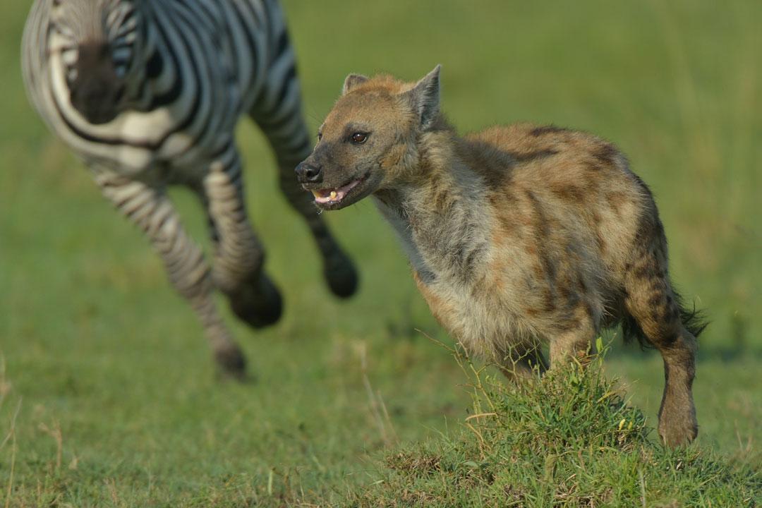 Masai-Mara-3-13-Jan_2015_00739