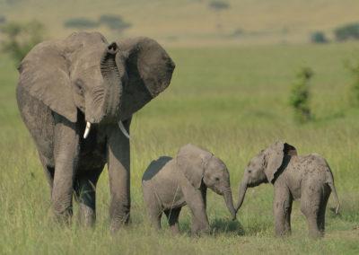 Masai-Mara-3-13-Jan_2015_00848