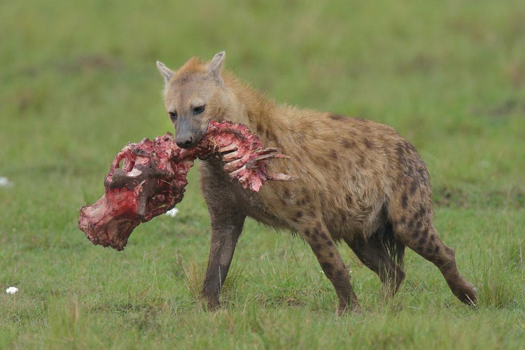 Masai-Mara-3-13-Jan_2015_01187