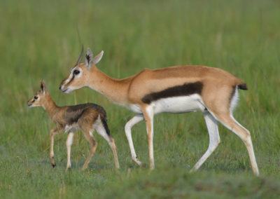 Masai-Mara-3-13-Jan_2015_02937