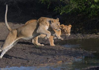 Serengeti-29th-Sept-5th-Oct-2017_03864