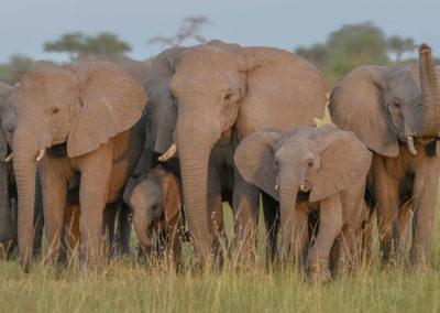 Serengeti-30-Jan--5-March_2016_05052-Edit