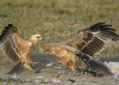 Serengeti-30-Jan--5-March_2016_06954-Edit