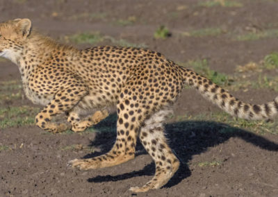 Serengeti-30-Jan--5-March_2016_11908-Edit