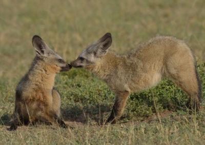 Serengeti-6-17-March_2015_00308