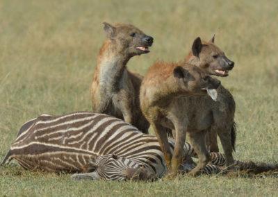 Serengeti-6-17-March_2015_00681