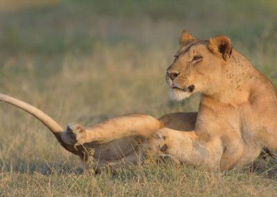 Serengeti-6-17-March_2015_02534