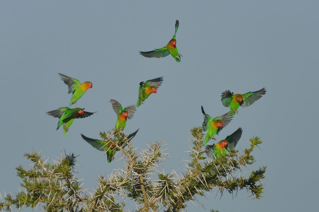 Serengeti-6-17-March_2015_04559
