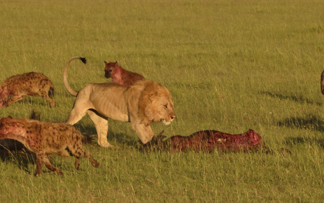A glorious morning in the Masai Mara