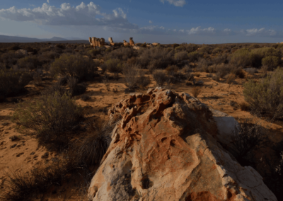 Kagga-Kamma-18-21-Jan_-2018_00608D