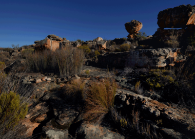Kagga-Kamma-18-21-Jan_-2018_00964D
