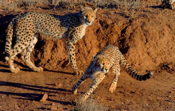 Photo safari Samara South Africa