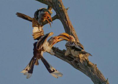 Greater Kruger Photo Safari